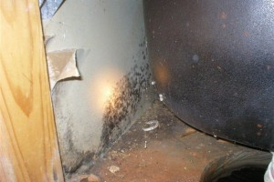 The Effects of Mold Exposure on Your Health