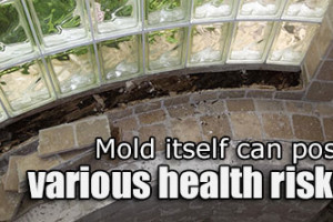 Mold Should Be Taken Seriously; Poses Serious Health Risks