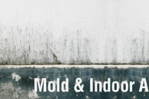 Mold: An Indoor Air Quality Concern